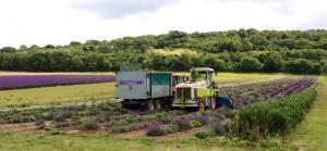 Lavender harvester
